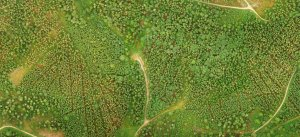 uav-forest-mapping-title